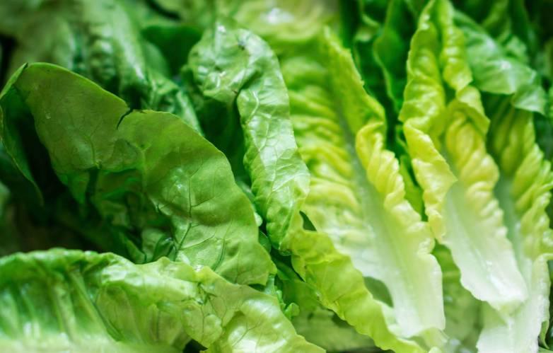 How To Keep Lettuce Fresh Longer